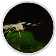 Mosquito Round Beach Towel by Paul Ward
