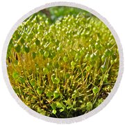 Moss And Fruiting Bodies - Green Lane Pa Round Beach Towel