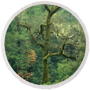 Moss Covered Tree Central California Round Beach Towel