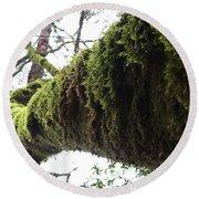 Moss Covered Tree Round Beach Towel