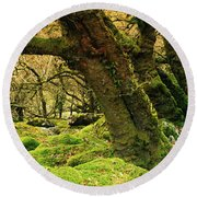 Moss Covered Trees In A Forest Round Beach Towel