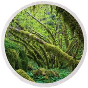 Moss Grows On Vine Maple Trees  Acer Round Beach Towel