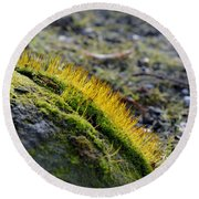 Moss In The Light Round Beach Towel