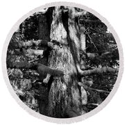 Moss On The Evergreens II In Black And White Round Beach Towel