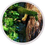 Moss On The Evergreens Round Beach Towel