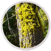 Moss On Tree Along Sentinel Dome Trail In Yosemite Np-ca Round Beach Towel