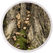 Moss-shrooms On A Tree Round Beach Towel