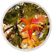 Mossy Lichen Tree Leaves Art Prints Autumn Round Beach Towel