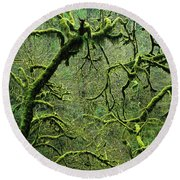Mossy Trees Leafless In The Winter Round Beach Towel