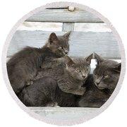 Cat And Kittens Round Beach Towel