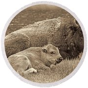 Mother Buffalo And Calf Sepia Round Beach Towel