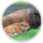 Mother Buffalo And Calf Yellowstone Round Beach Towel