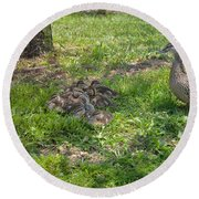 Mother Duck With Nest Round Beach Towel