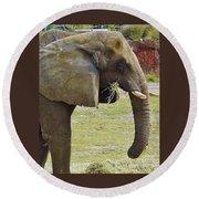 Mother Elephant Round Beach Towel