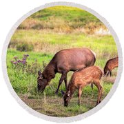 Mother Elk With Her Young Round Beach Towel