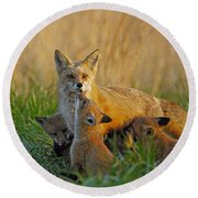 Mother Fox And Kits Round Beach Towel by William Jobes