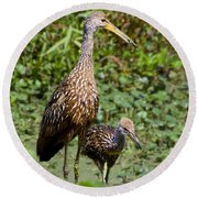 Mother Limpkin And Colt Round Beach Towel