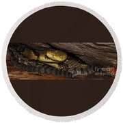 Mother Snake Round Beach Towel