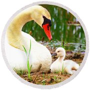 Mother Swan And Baby Round Beach Towel