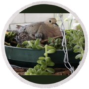 Mother With Baby Mourning Dove Round Beach Towel