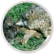 Mother Wolf Nuzzles Cubs Round Beach Towel