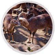 Mouflon Round Beach Towel