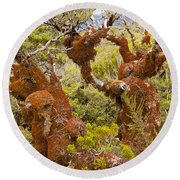 Mountain Beech Rain Forest In Fjordland Np Nz Round Beach Towel