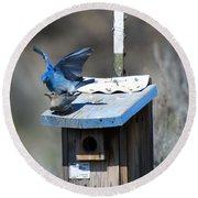 Mountain Bluebirds Mating Round Beach Towel