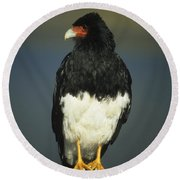 Mountain Caracara Round Beach Towel