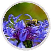 Mountain Cornflower And Bumble Bee Round Beach Towel by Byron Varvarigos