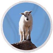 Mountain Goat Kid On Mount Evans Round Beach Towel