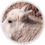 Mountain Goat Kid Portrait On Mount Evans Round Beach Towel
