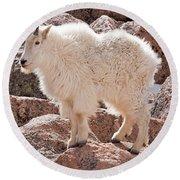 Mountain Goat On Mount Evans Round Beach Towel