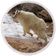 Mountain Goat On Snowfield On Mount Evans Round Beach Towel