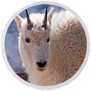 Mountain Goat Portrait On Mount Evans Round Beach Towel