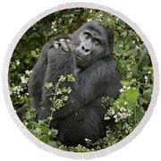 Mountain Gorilla Praying Round Beach Towel