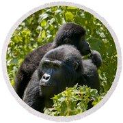Mountain Gorilla With Infant  Round Beach Towel
