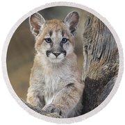 Mountain Lion Cub Round Beach Towel