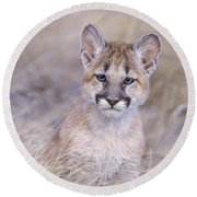 Mountain Lion Cub In Dry Grass Round Beach Towel