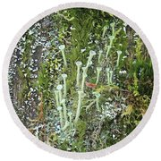 Mountain Moss Lichens And Fungi Round Beach Towel