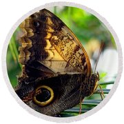 Mournful Owl Butterfly In Sunlight Round Beach Towel