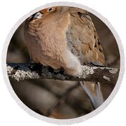Mourning Dove Pictures 32 Round Beach Towel