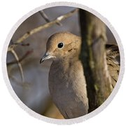 Mourning Dove Pictures 39 Round Beach Towel