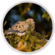 Mourning Dove Pictures 64 Round Beach Towel