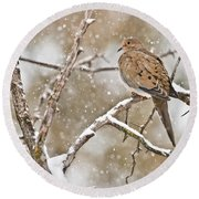 Mourning Dove Pictures 68 Round Beach Towel