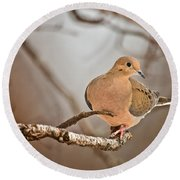 Mourning Dove Pictures 71 Round Beach Towel