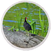 Mouthy Moorhen Round Beach Towel