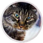 Mr. Lynx - Tabby - Cat Round Beach Towel