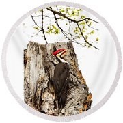 Mr.pileated Poses Round Beach Towel