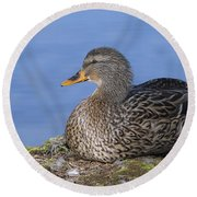 Mrs. Mallard Round Beach Towel